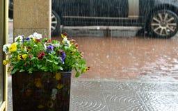 Zware regen in Moskou, stock foto's