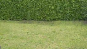 Zware regen op een tuin stock video