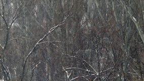 Zware Sneeuw Dalende Takken 4K stock footage