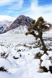 Zware Sneeuw in de Vallei van Las Vegas Royalty-vrije Stock Afbeeldingen
