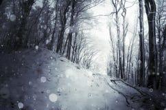 Zware sneeuw die in de winterbos vallen royalty-vrije stock foto