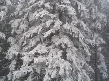 Zware sneeuw op bomen Stock Fotografie