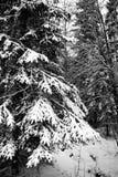 Zware sneeuw op struik Stock Afbeeldingen