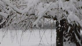 Zware sneeuwdaling op takken in bosopheldering stock videobeelden