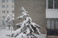 Zware sneeuwval Royalty-vrije Stock Afbeeldingen