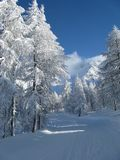 Zware sneeuwval Stock Afbeeldingen