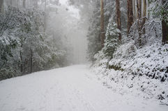 Zware sneeuwval op bergweg die in Eucalyptusbos winden, Au Royalty-vrije Stock Fotografie