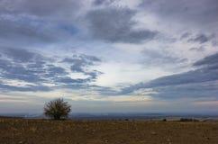 Zware wolken over de vlakke prairie landbouwgrond met een eenzame boom bij de recente herfst Stock Fotografie