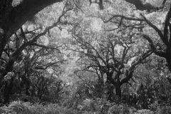 Zwart adn wit bomen en gebied Royalty-vrije Stock Afbeelding