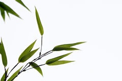 Zwart Bamboe Stock Foto's