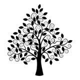Zwart boomsilhouet dat op witte achtergrond wordt geïsoleerdo Royalty-vrije Stock Foto