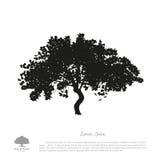 Zwart boomsilhouet op een witte achtergrond Beeld van appel royalty-vrije illustratie