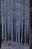 Zwart bos royalty-vrije stock foto's