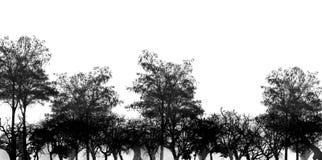 Zwart Bos Stock Afbeelding