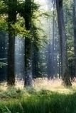 Zwart bos royalty-vrije stock afbeeldingen