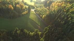 Zwart bos bij de herfst stock videobeelden