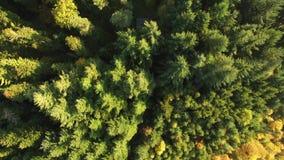 Zwart bos bij de herfst stock video