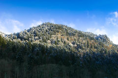 Zwart bos in de winter Stock Foto
