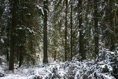 Zwart bos in de winter Stock Afbeelding