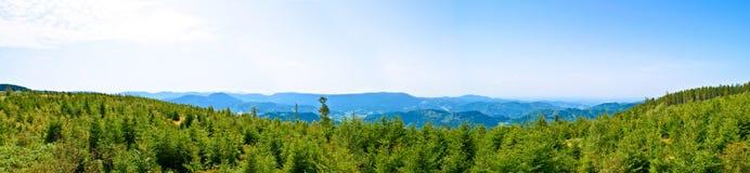 Zwart bosDuitsland Stock Fotografie