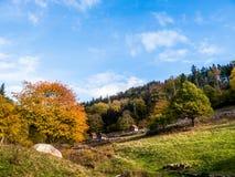 Zwart Boslandschap met loodsen op een helling in de herfst stock fotografie