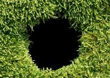 Zwart die gat met mos wordt omringd Royalty-vrije Stock Fotografie