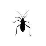 Zwart die insect op witte achtergrond wordt geïsoleerd vector illustratie