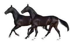 Zwart die paard twee op wit wordt geïsoleerd Stock Foto's