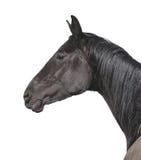 Zwart die paardportret op wit wordt geïsoleerd Stock Foto's