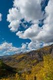 Zwart draag de Dalingskleuren Autumn Landscape van Colorado van het Pastelluride Stock Foto's