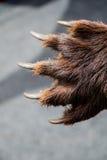 Zwart draag de scherpe Klauwen van Paw With stock afbeelding