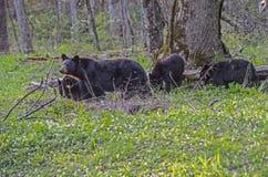 Zwart draag Moeder en drie babys in de rand van hout stock foto
