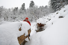 Zwart Forest Hiker in de winter Royalty-vrije Stock Foto's