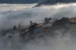 Zwart Forest Mountains Landscapennature Trees Fog Duitsland Schwarzwald Schauinsland Stock Foto's