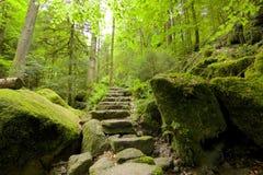 Zwart Forest Stone Staircase Stock Afbeeldingen