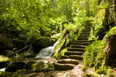 Zwart Forest Stone Staircase Stock Foto's