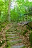 Zwart Forest Stone Staircase Stock Foto