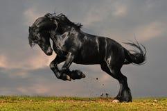 Zwart friesian paard Royalty-vrije Stock Foto's