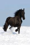 Zwart friesian paard op de weide Stock Afbeeldingen