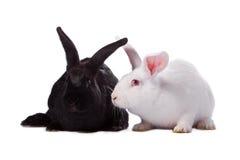 Zwart geïsoleerdg konijn en wit konijn stock afbeelding