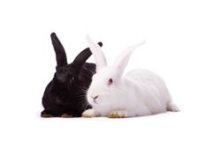 Zwart geïsoleerdr konijn en wit konijn Royalty-vrije Stock Foto