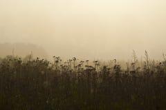 Zwart gras royalty-vrije stock afbeelding