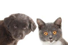 Zwart grijs puppy en katje Royalty-vrije Stock Foto's