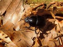 Zwart insect royalty-vrije stock fotografie