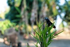 Zwart Insect Stock Fotografie