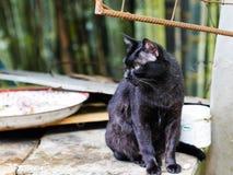 Zwart kat het letten op voedsel Stock Afbeeldingen
