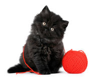 Zwart Katje Stock Afbeelding
