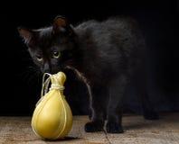 Zwart katje die typische Italiaanse kaas Caciocavallo op dark snuiven stock foto's