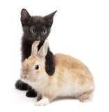 Zwart katje met poot rond konijn Royalty-vrije Stock Foto