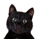 Zwart kattenportret Royalty-vrije Stock Afbeeldingen